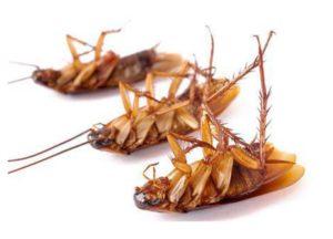 Как избавиться от жуков в доме?
